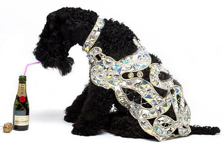 luxury_dog_deluxe.jpg